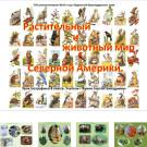 Презентация Животные и растения Северной Америки