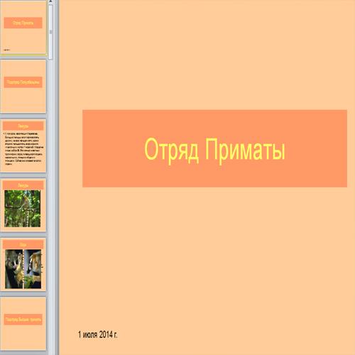 Презентация Обезьяны