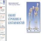 Презентация Скелет