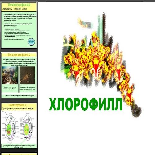 Презентация Хлорофилл