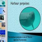 Презентация Морская свинья