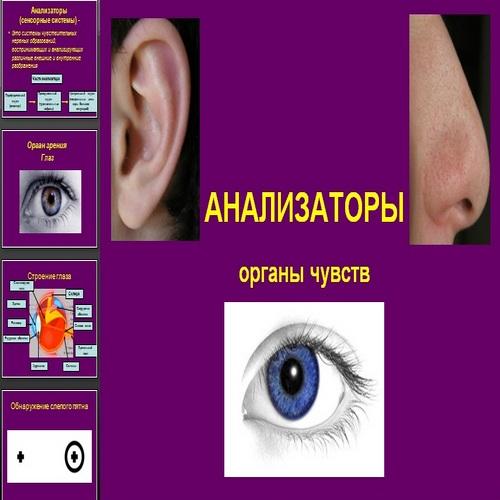 Презентация Анализаторы