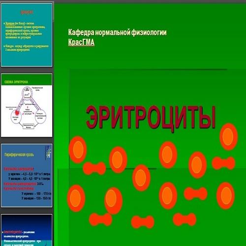 Презентация Эритроциты