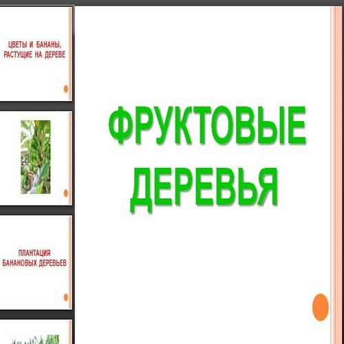 Презентация Фруктовые деревья