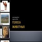 Презентация Голоса животных