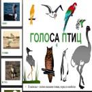 Презентация Голоса птиц
