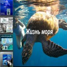 Презентация Жизнь моря