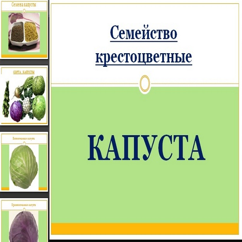 Презентация Капуста