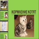 Презентация Кормление котят