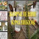 Презентация Кормление кроликов
