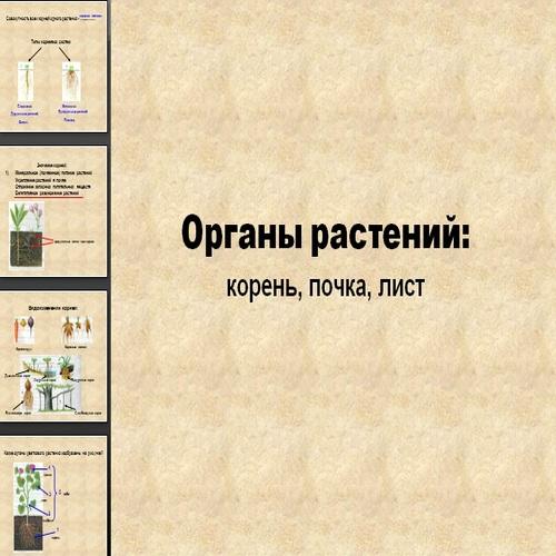 Презентация Органы растений