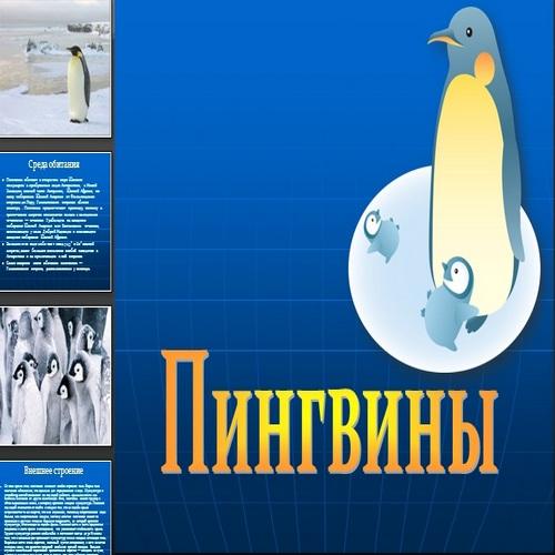 Презентация Пингвины