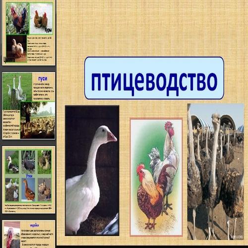 Презентация Птицеводство