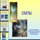 Презентация Скаты