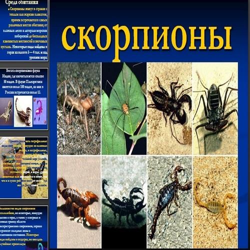 Презентация Скорпионы