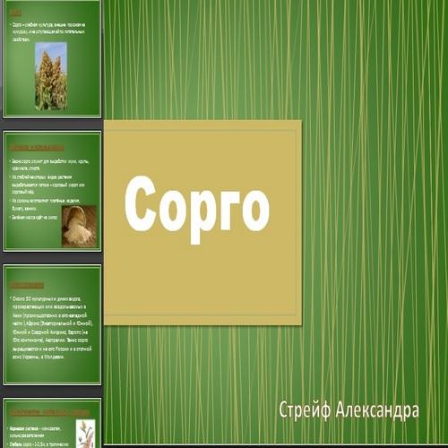 Презентация Сорго
