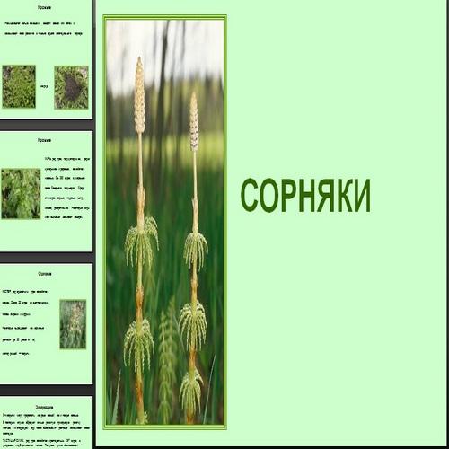 Презентация Сорняки
