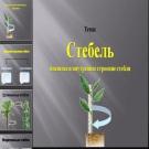 Презентация Стебель
