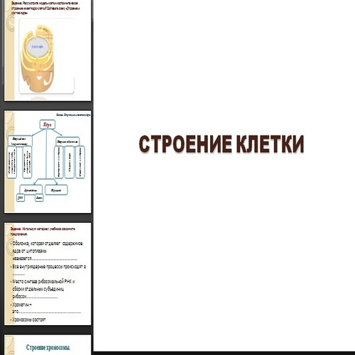 Презентация Строение клетки