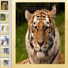 Презентация Тигр