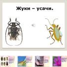 Презентация Жук Усач