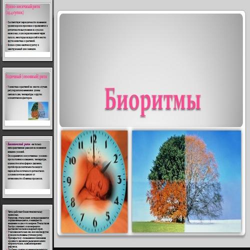 Презентация Биоритмы