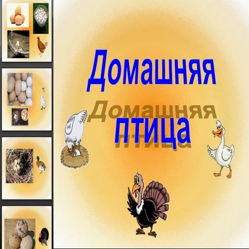 Презентация Домашняя птица