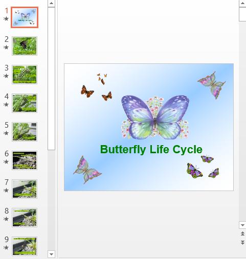 Презентация Жизнь бабочки