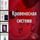 Презентация Кровеносная система