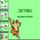 Презентация Лягушка