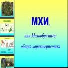 Презентация Мхи