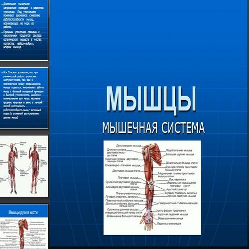 Презентация Мышцы