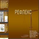 Презентация Рефлекс