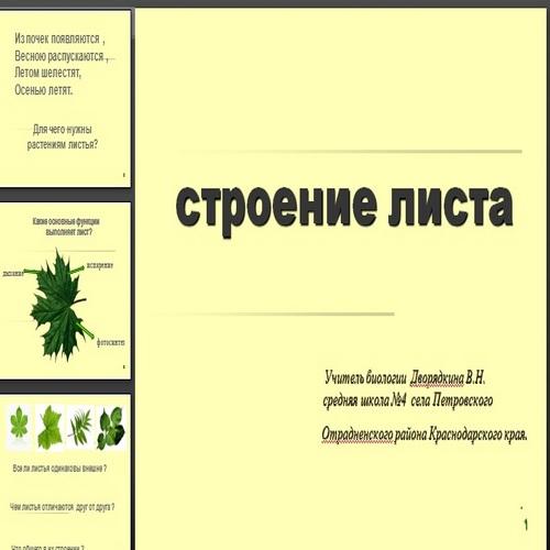 Презентация Строение листа