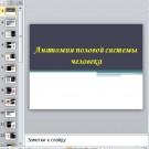 Презентация Анатомия половой системы человека