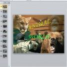 Презентация Animal world