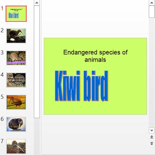 Презентация Kiwi bird