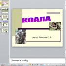 Презентация Коала