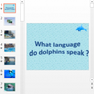 Презентация What language do dolphins speak