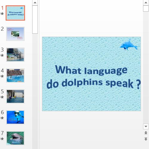 Презентация What language do dolphins speak