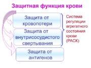 Защитная функция крови Защита от кровопотери Защита от