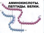 АМИНОКИСЛОТЫ. ПЕПТИДЫ. БЕЛКИ. Строение аминокислоты H2N–CH–COOH | R