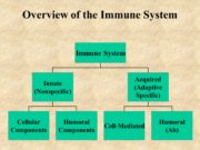 Overview of the Immune System. Acquired immunity The