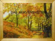 DAS NERVENSYSTEM Виконала студентка 31 -Ф групи Нестер