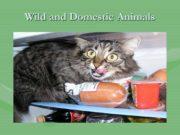Wild and Domestic Animals. Domestic Animals Cat It
