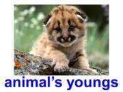 animal's youngs little hair deer's calf little hedgehog