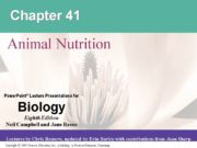 Chapter 41 Animal Nutrition. Overview: The Need to