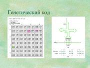 Генетический код Рибосомы Транспортная РНК Инициация трансляции Элонгация