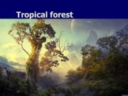 Tropical forest End