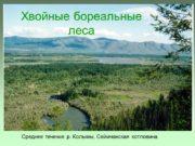 Среднее течение р. Колымы, Сеймчанская котловина Хвойные бореальные